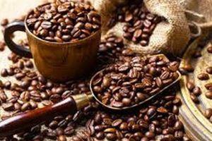 Giá cà phê hôm nay 8/12: Thị trường cà phê điều chỉnh, tăng giảm trái chiều; Giá cao su đi xuống