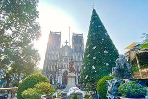 Cận cảnh những cây thông Noel 'khổng lồ' tại Hà Nội