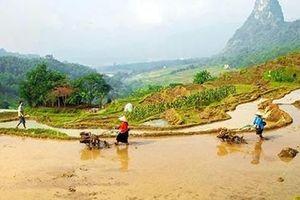 Gió rừng đồi Thung