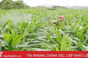 Công ty TNHH Vitad góp phần nâng cao giá trị sản xuất cho người dân Hà Tĩnh