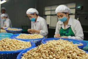 Xuất khẩu hạt điều tiếp tục tăng trưởng mạnh bất chấp dịch Covid-19