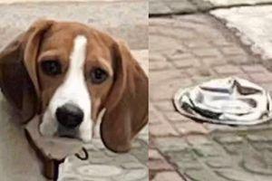 Bị chủ cán bẹp mất bát cơm, biểu cảm bất bình của chú chó khiến CĐM hú hét