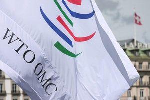 Chính quyền Biden có thể vực dậy WTO?