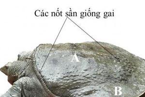 Bảo hộ chỉ dẫn địa lý 'Văn Chấn' cho sản phẩm ba ba gai thương phẩm