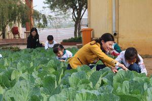 Phú Tho: Thanh Ba vườn rau 'an toàn' là nguồn thực phẩm sạch phục vụ bếp ăn trường học bán trú