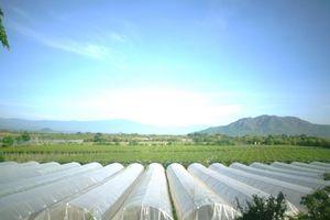 Doanh nghiệp bắt tay trường đại học ứng dụng nông nghiệp công nghệ cao