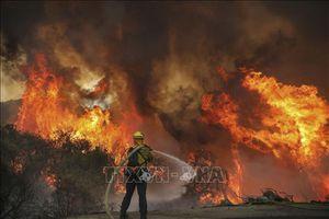 Cháy rừng giảm số lượng nhưng tăng về quy mô