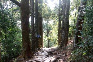 Đường Xích Tùng cổ giữa non thiêng Yên Tử
