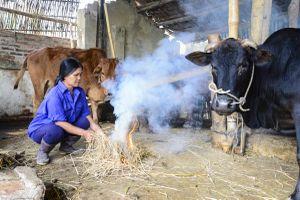 Người dân Điện Biên chủ động phòng chống rét cho gia súc