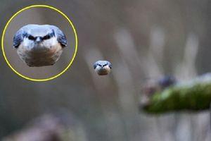 Bức ảnh chim nhăn nhó, 'khó ở' gây sốt