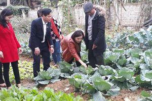 Mô hình 'Nhà sạch - vườn mẫu' đảm bảo vệ sinh an toàn thực phẩm, góp phần xây dựng nông thôn mới kiểu mẫu