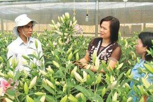 Lạng Sơn ứng dụng công nghệ để cải thiện môi trường đầu tư, kinh doanh