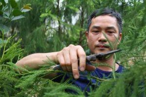 Hành trình bảo tồn, phát triển giống cây hiếm ở Yên Tử