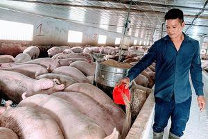 Khắc phục tình trạng ô nhiễm môi trường do chất thải chăn nuôi
