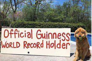 Chú chó lập kỷ lục thế giới khi ngậm một lúc... 6 trái bóng