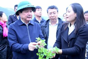 Thạch đen xuất khẩu chính ngạch sang Trung Quốc: Mừng và lo!