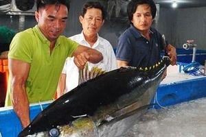 Công nghệ nano UFB: Nâng cao chất lượng bảo quản cá ngừ đại dương, mở rộng thị trường xuất khẩu