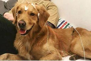Loài chó học được 165 từ trong suốt cuộc đời