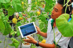 Doanh nghiệp 'khóc ròng' vì đầu tư nông nghiệp công nghệ cao