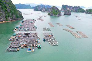 Để phát triển bền vững ngành thủy sản tại Vân Đồn