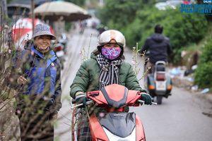 Thời tiết rét đậm, đào Nhật Tân xuống phố báo hiệu cái Tết đã cận kề