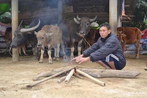 Nông dân miền núi Nghệ An nhóm lửa, che chuồng chống rét cho trâu, bò