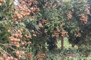 Hưng Yên: Đẩy mạnh sản xuất các sản phẩm nông nghiệp theo hướng VietGap
