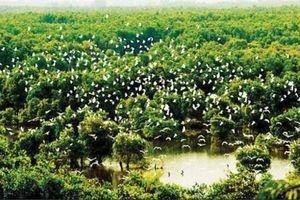Kho tài nguyên tiếng chim hót trong rừng tràm xanh