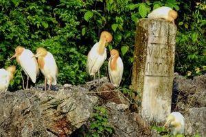 Xử lý tình trạng bẫy, bắt chim hoang dã tại Cát Bà