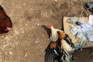 14 người bị bắt giữ trên sới gà