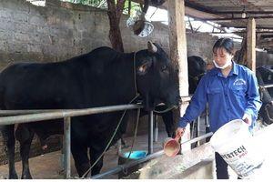 Ứng dụng công nghệ cao trong chăn nuôi: Hướng phát triển bền vững