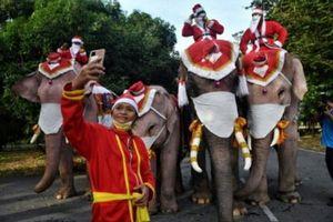 Ông già Noel cưỡi voi phát khẩu trang để nâng ý thức phòng dịch