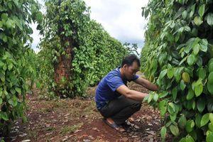 Điều chỉnh tiêu chí nông thôn mới: Cần tính đến yếu tố tác động