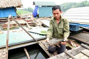 Tuyên Quang: Nuôi nhốt những con cá đặc sản râu dài trước ví như 'loài thủy quái' tinh ranh, dân trở nên giàu có
