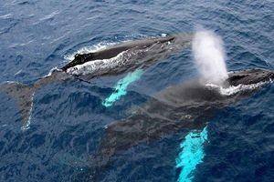 Cận cảnh loài động vật bí ẩn nặng hơn 100 tấn trên trái đất
