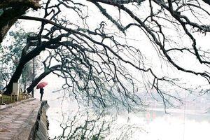 Khoảnh khắc mùa đông Hà Nội
