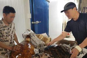 Bắt giữ vụ tàng trữ tiêu bản rùa biển lớn nhất năm 2020