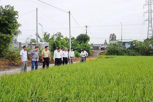 An Giang liên kết phát triển nông nghiệp