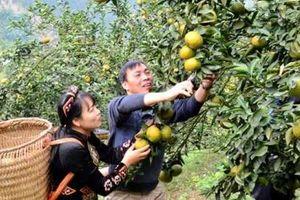 Tuyên Quang chứng nhận 17 sản phẩm OCOP 4 sao