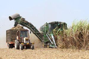 TTC Sugar (SBT) hoàn tất phát hành hơn 30,4 triệu cổ phiếu ESOP