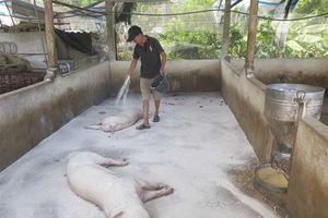 Phòng chống dịch tả lợn châu Phi ở khu vực biên giới