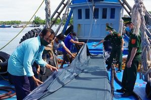 Hải đoàn 18 BĐBP bắt vụ vận chuyển 80.000 lít dầu DO không rõ nguồn gốc