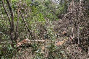 Rừng đặc dụng ở Điện Biên kêu cứu: Ban Quản lý thiếu trung thực