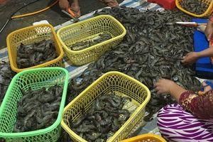 Kiên Giang: Bắt quả tang hộ kinh doanh bơm tạp chất vào tôm nguyên liệu