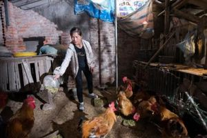 'Tiếp Sức Nhà Nông' tiếp sức cho 140 hộ nông dân trong năm 2020