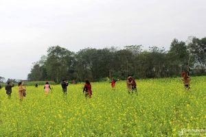 Chiêm ngưỡng cánh đồng hoa cải vàng rực ven sông Lam