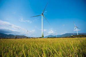Đề xuất giảm giá FIT điện gió: DN kiến nghị kéo dài giá hiện tại