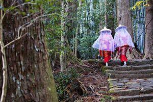 Khám phá văn hóa 'tắm rừng' kỳ lạ ở Nhật Bản