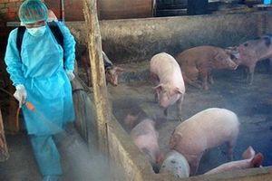 Mức hỗ trợ phòng, chống dịch tả lợn Châu Phi