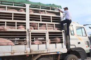 Đề xuất bổ sung cửa khẩu tiếp nhận vật nuôi sống